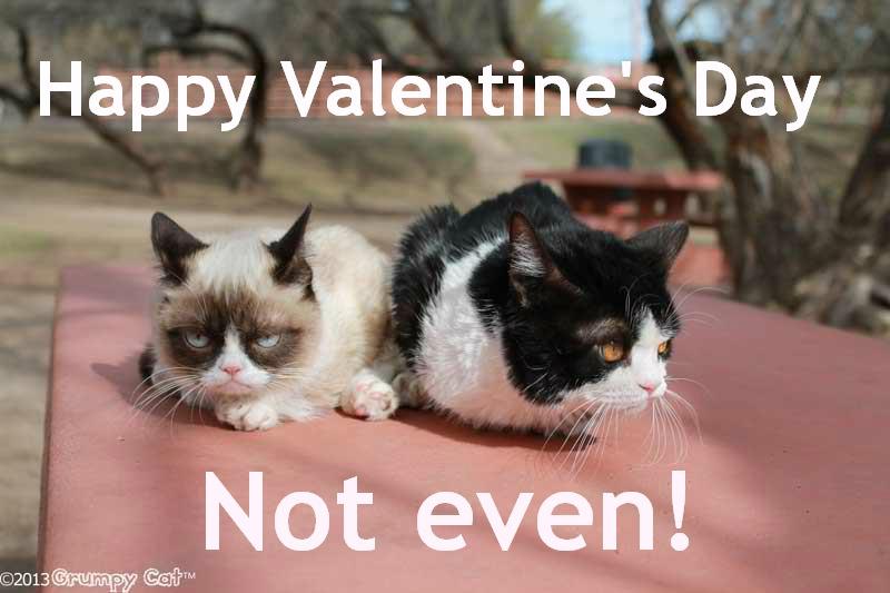 Grumpy Cat ? Sharon Hughson, Author   Grumpy Cat Valentine