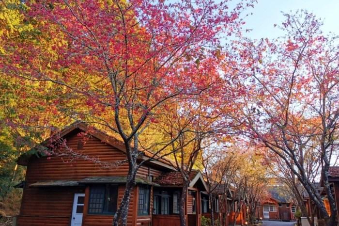 大雪山森林遊樂區 高山風景四季皆美 台中二日遊 住宿訂房+散步步道大解析