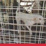 כלב במכלאה מערב הרצליה