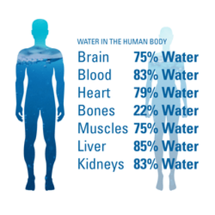 Infographic of percentages of water in the human body by body part.