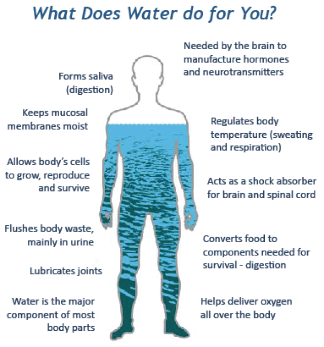 Infographic of What Does Water do you You showing 11 functions of water encircling outline of a human body.