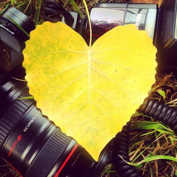 love heart yellow photography