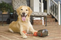Happy dog on location