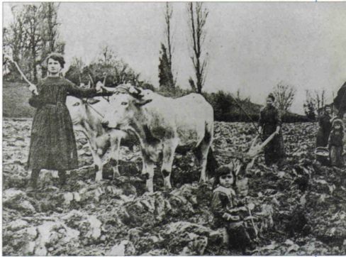 women and cow in a field