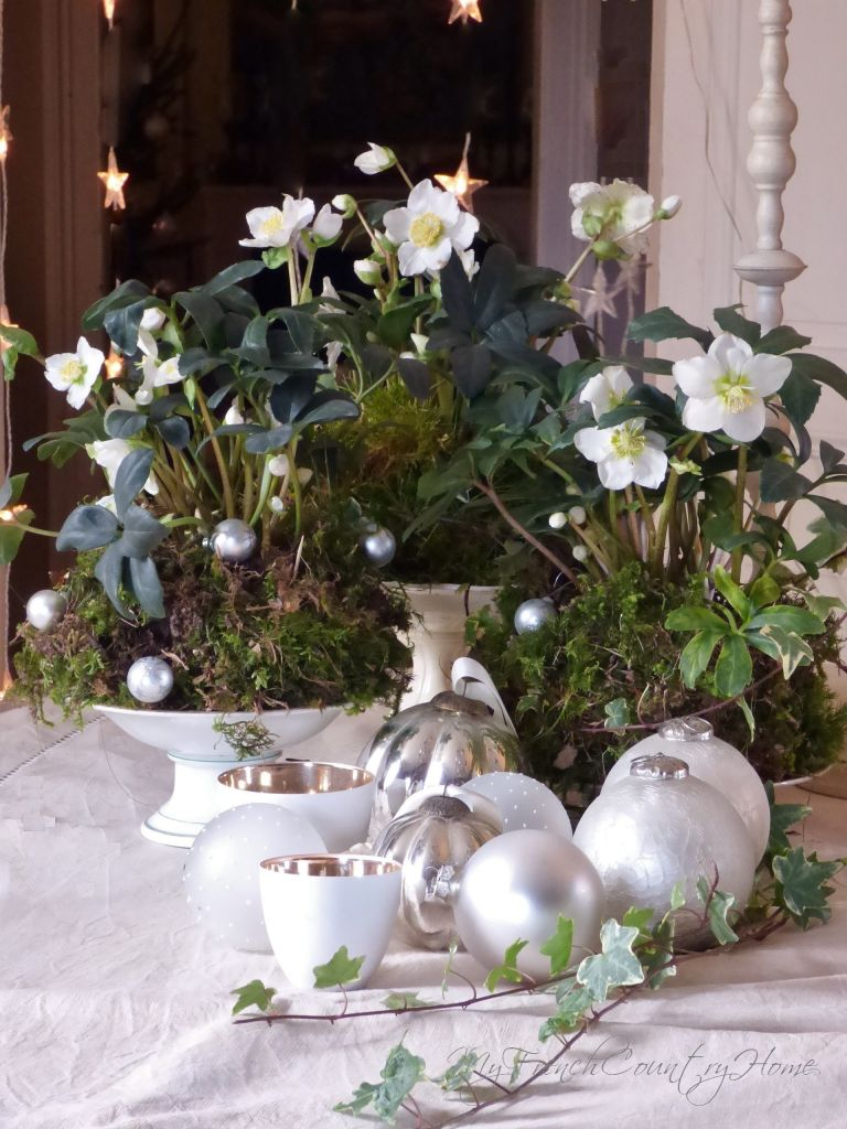hellebore and moss for a christmas display