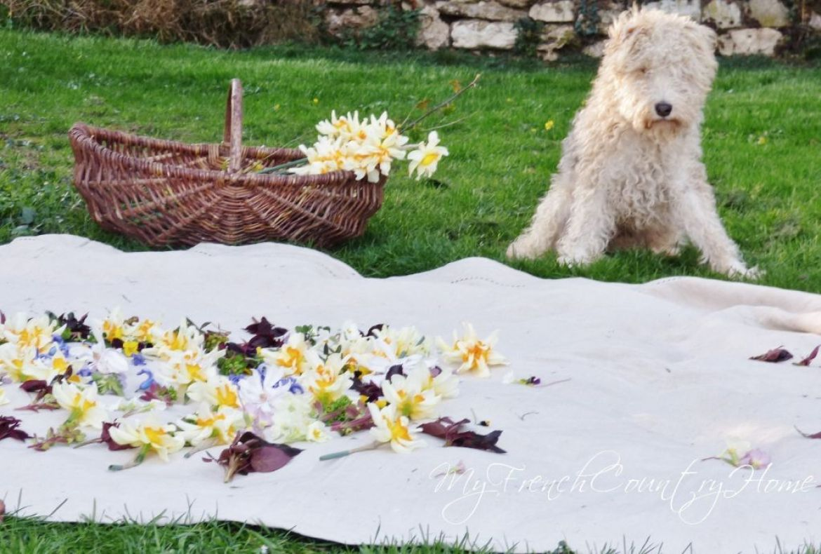 spring flowers laid out on sheet