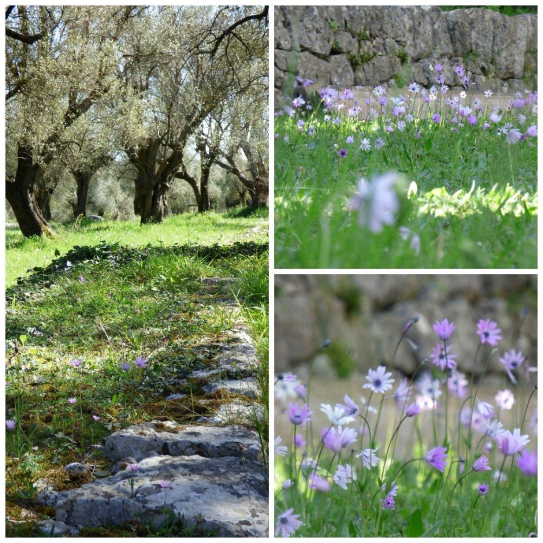 provencal garden around modern home
