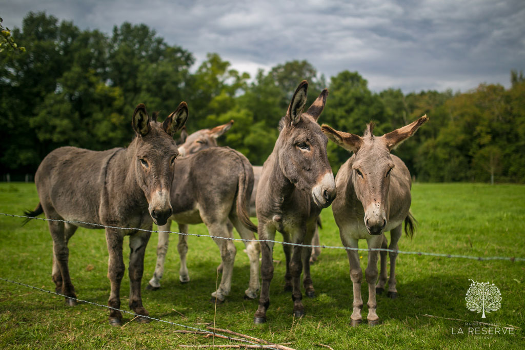 donkeys in field at la reserve giverny