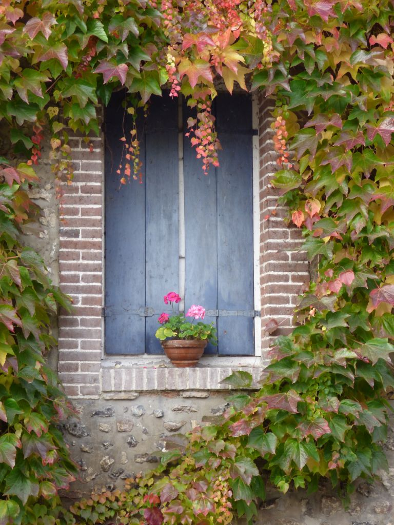 blue shutter and ivy on wall