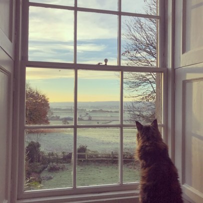 cat sitting in front of window