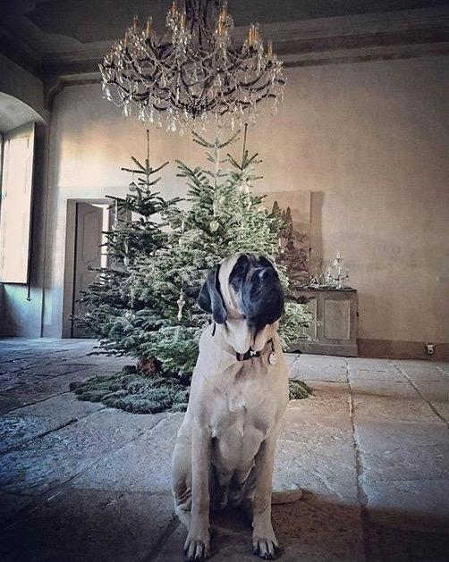 Daphne, resident star at chateau de moissac
