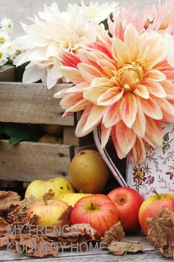 dahlias and autumn apples