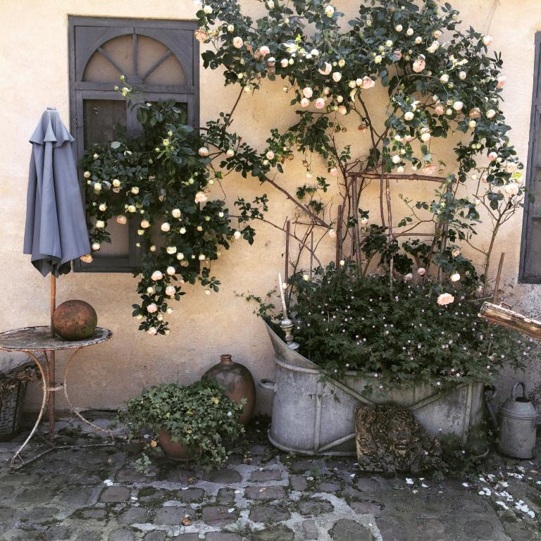 courtyard with roses, my french country home, house for sale