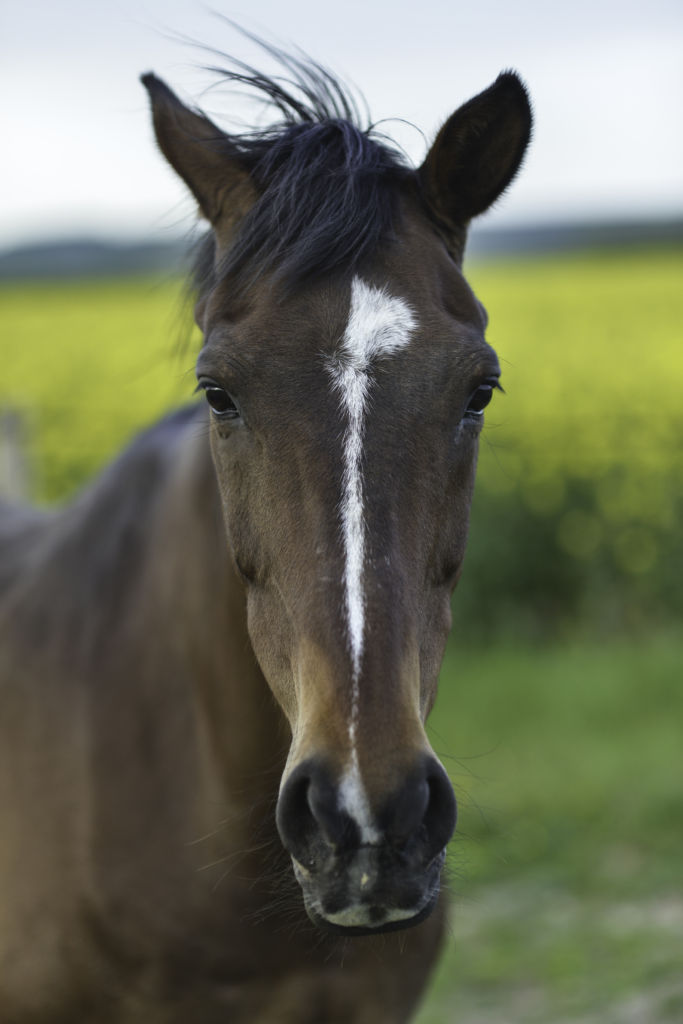 horse in normandy, photo by james pouliot