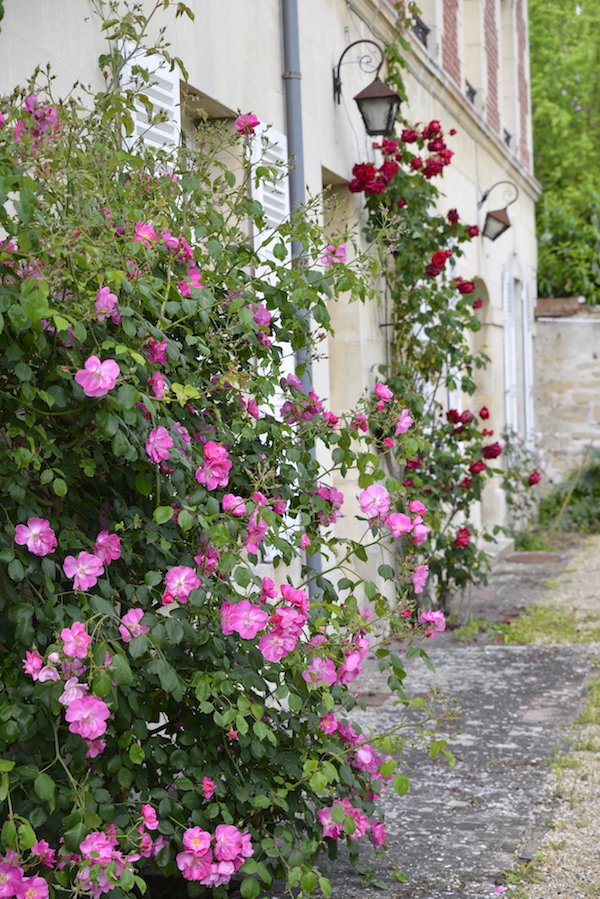 guest and house La maison et l'atelier roses in the garden