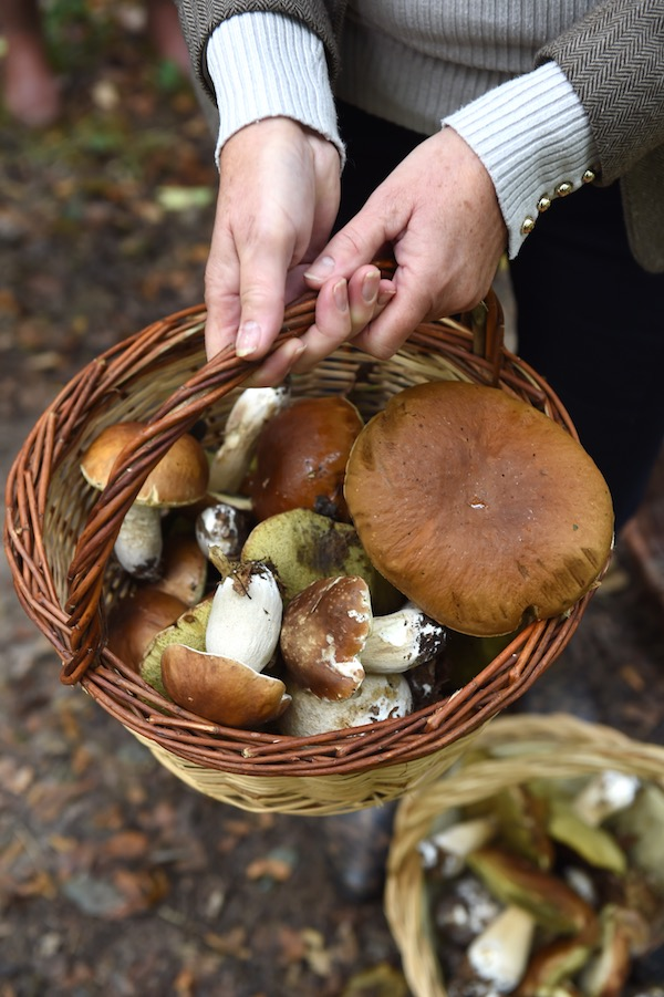 mushrooms in basket, photo by Franck Schmitt