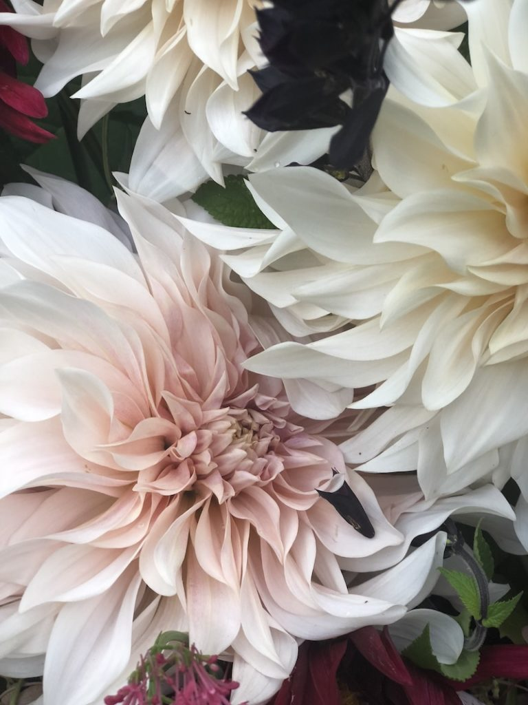 dahlias- early autumn in my garden- MY FRENCH COUNTRY HOME