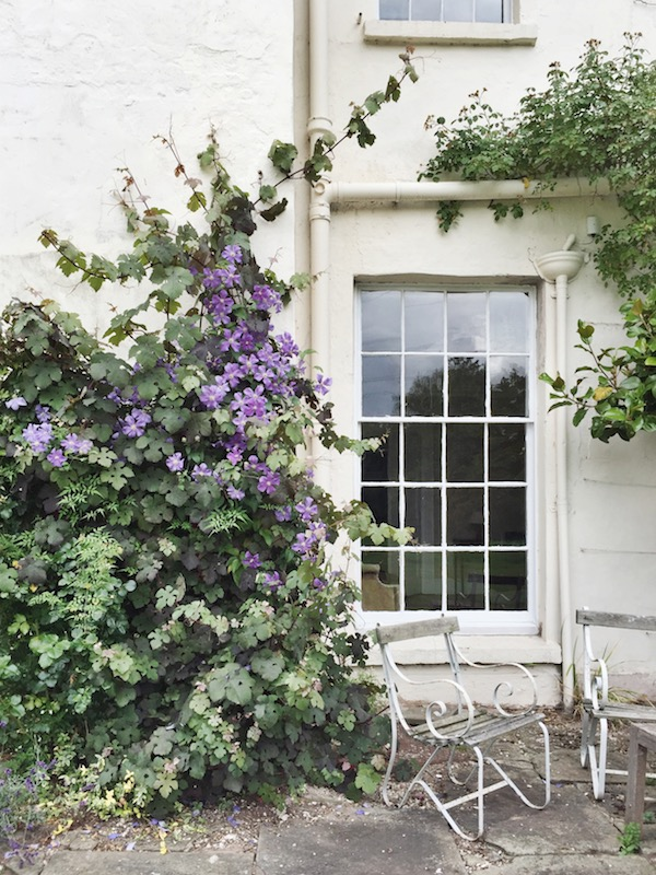 outside wall with vines and a place to sit and large window