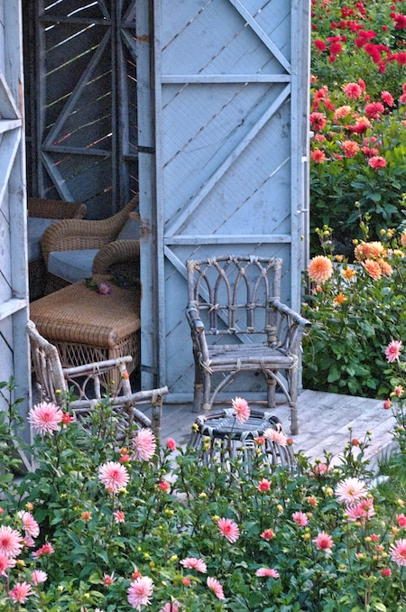 a wicker chair in amongst the dahlias at château de la bourdaisière