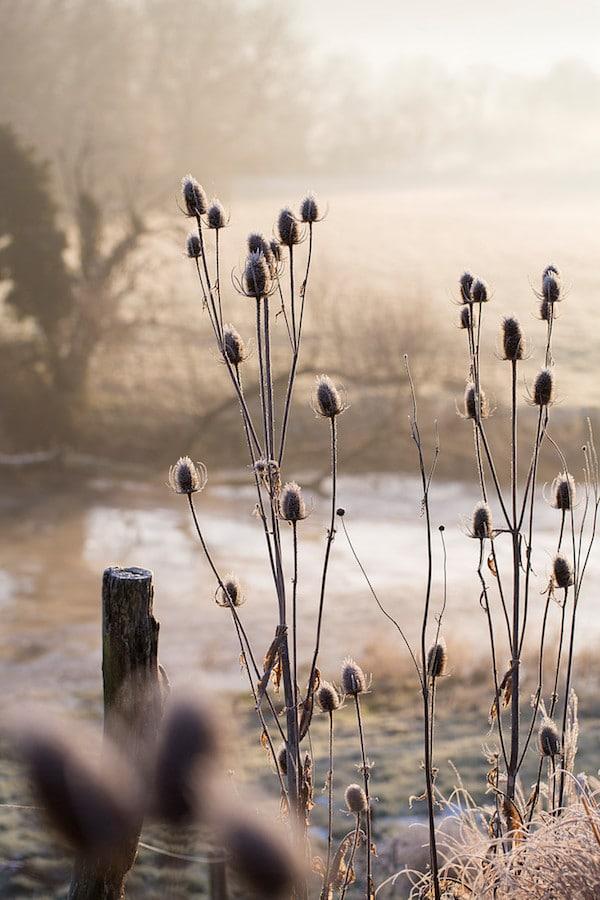 winter light by the river