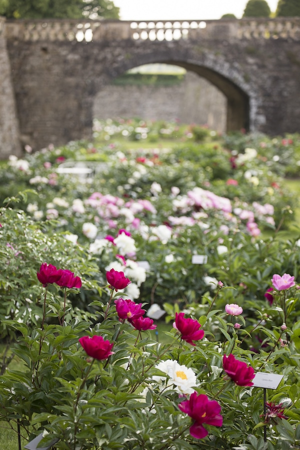 peonies in moat at chateau de sourches