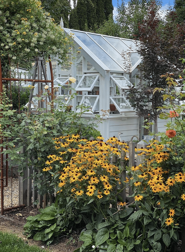 country greenhouse with sunflowers