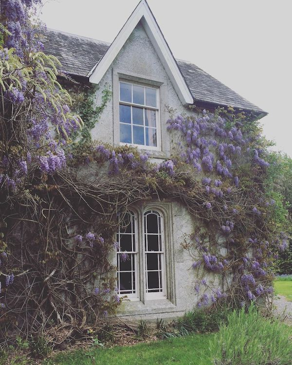 grey manor house covered in wisteria
