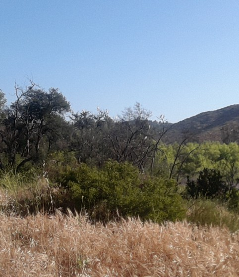 #38 Foxy Trail