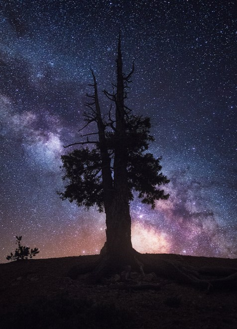 Old tree in Bryce Canyon NP.