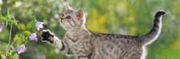 cropped-cat-wallpaper-15.jpg