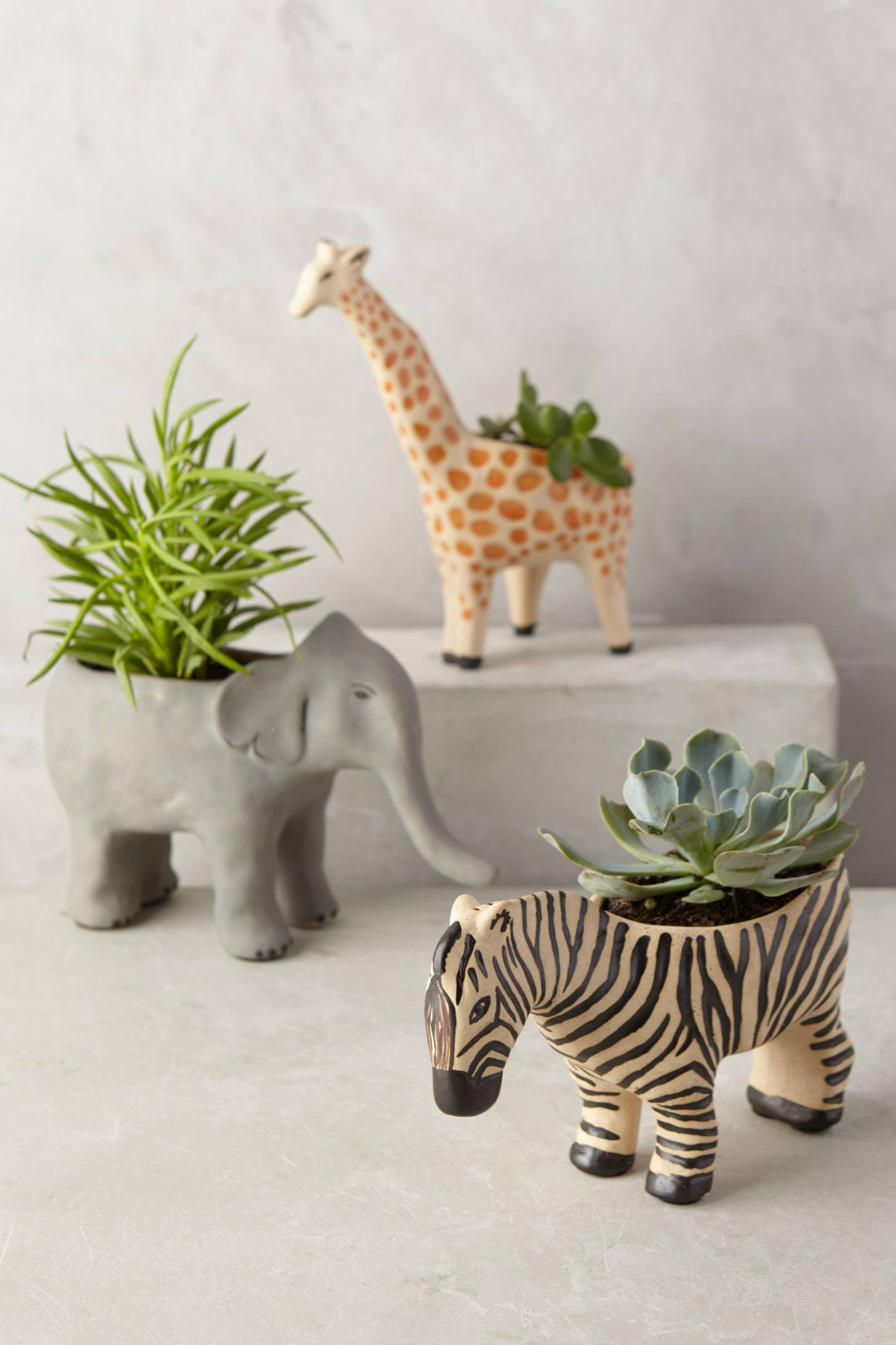 Best Animal Succulent Planter Home Decorating Trends Homedit This Month