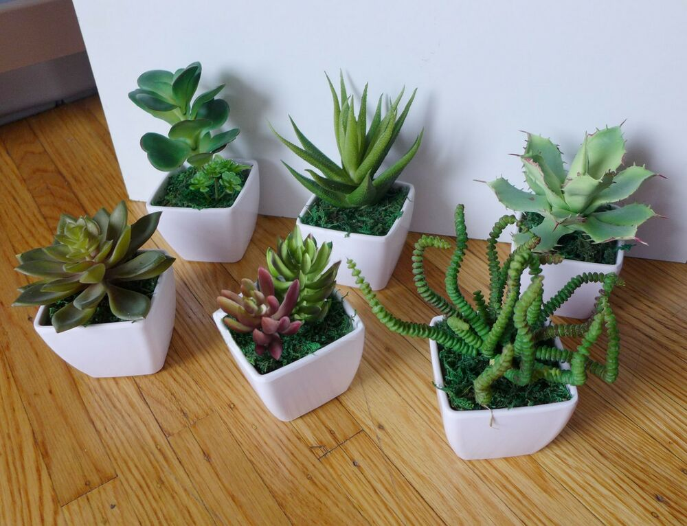 Best Small Potted Artificial Mini Plants Home Wedding Decor Ebay This Month
