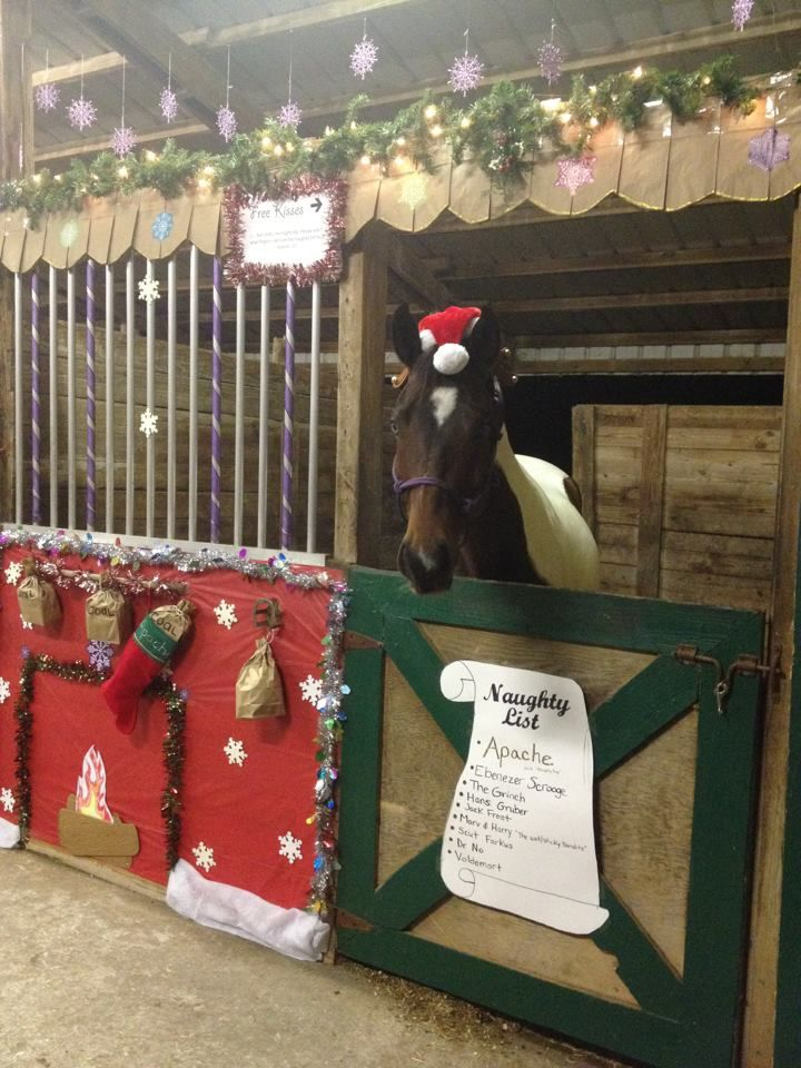 Best My Horse S Christmas Stall For Our Stall Decorating This Month