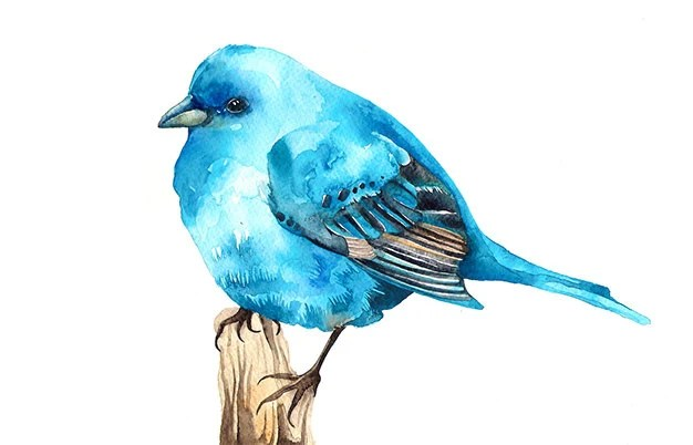 Best Items Similar To Bluebird Watercolor Illustration Print This Month