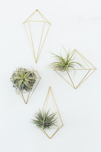 Best 17 Best Ideas About Hanging Air Plants On Pinterest This Month