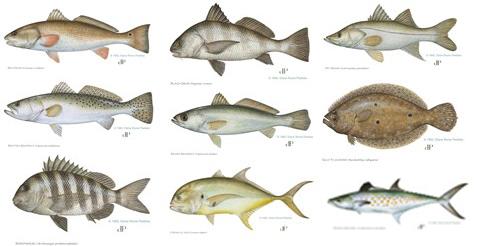 Inshore fish
