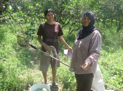 Luck and her mom are harvesting mangoes on their farm.