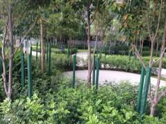 Shared garden space