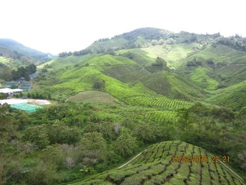 Taking in sights at Boh Tea Plantation.