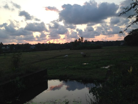 The sunsets over a rice paddy just outside Colombo where my teaching friends hosted us. For some reason, I didn't get any photos of the teachers or the school. Too caught up in the moment I guess.