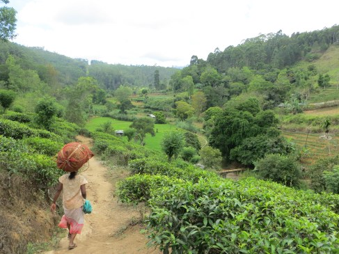The cooler climes of Ella were welcomed as we hiked through the tea estates to stunning view.