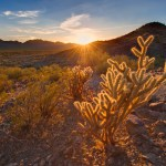 Cacti at Sunset, Sonoran Desert National Monument, 2011