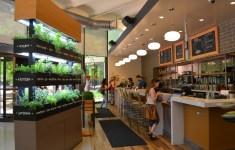 Dream Lyfe Kitchen Evanston That Everyone Should See