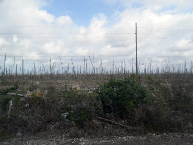 Northern side of island after hurricanes