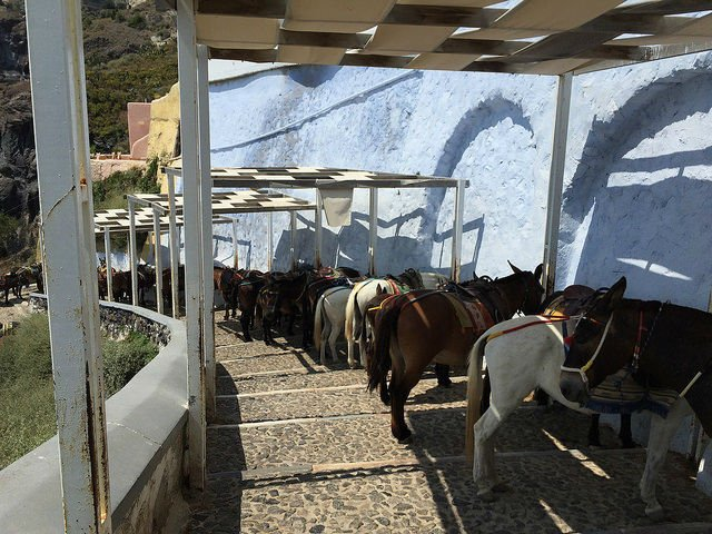 Stunning Santorini Greece - Donkeys trekking down from Thera