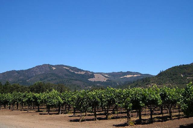 Napa Valley - Vineyard in Sonoma on the way to Napa