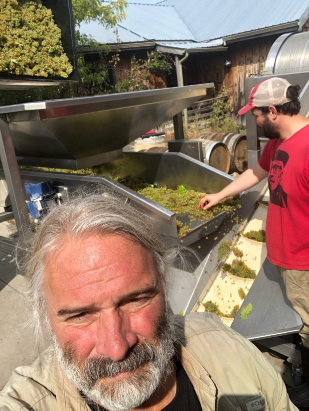 Whole cluster 2020 Sauvignon Blanc headed into the press