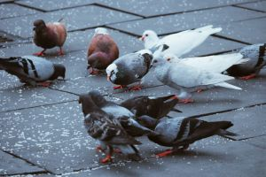 Bird pest control hampshire