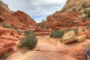 Red Rocks Calico Tanks
