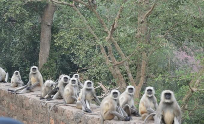 Khem Villas: Vegetarian Feasting & Tigers in Rajasthan